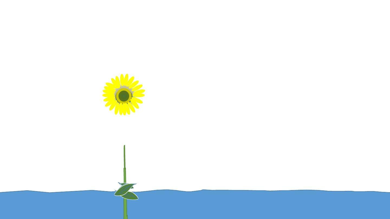 植物生长动画(非flash)ppt图片