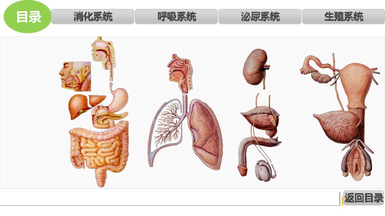人体系统_人体内脏解剖 (消化系统,呼吸系统,泌尿生殖系)ppt