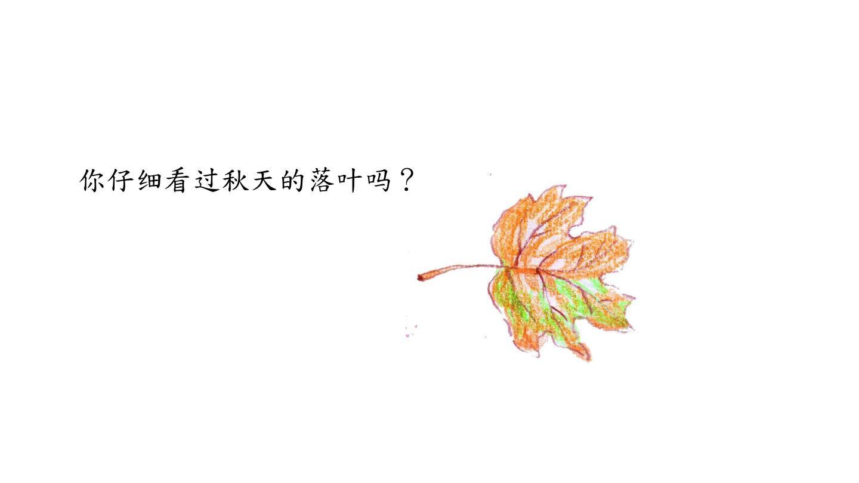 你仔细看过秋天的落叶吗?图片