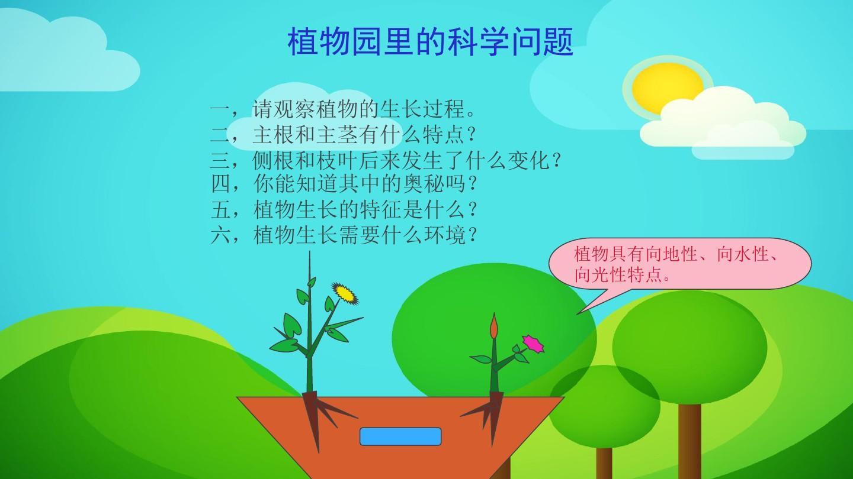 植物生长过程ppt图片