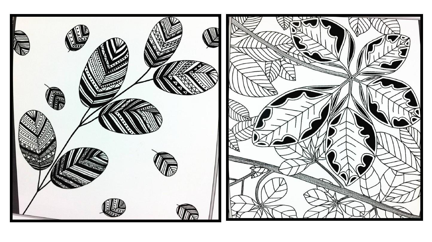 一年级学生用线描方式表现树叶.对叶脉进行线条装饰绘画