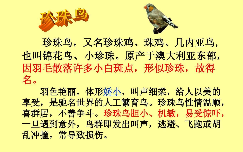 上册版五老师年级课件《珍珠鸟》ppt人教(1)英语语文如何快速备课图片